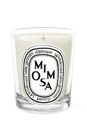 شمعة ميموزا